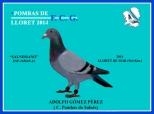 16566912 Adolfon gómez Pérez