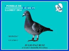 167060-12 Julio Paz