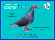 168187- 12 Juan Montes Giz