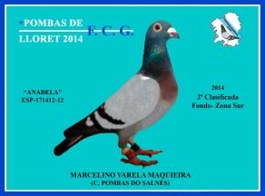 171412 MARCELINO VARELA