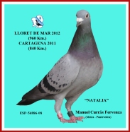 NATALIA, de Manolo Curr+ís