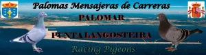 Palomar Punta Langosteira