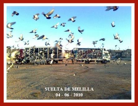 suelta_melilla-10